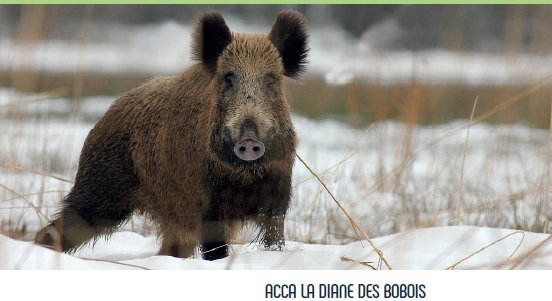 ACCA - Chasse
