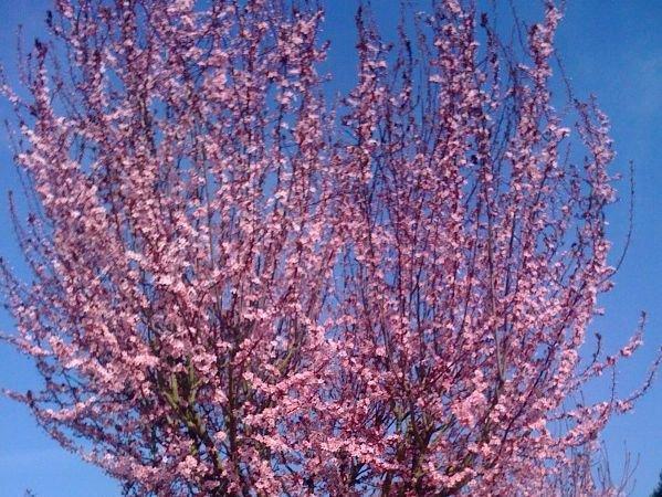Ecole Primaire les Prunus