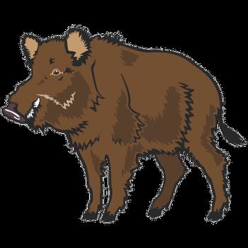 ACCA (association de chasse communale agréer)